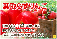 葉取らずりんご