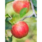 りんご(新世界)